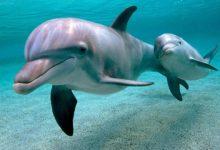 Photo of Американські інженери створили робота-дельфіна (ВІДЕО)