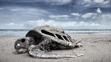 Photo of Вчені повідомили деталі найстрашнішої катастрофи в історії Землі, яка відбулася 250 млн років тому