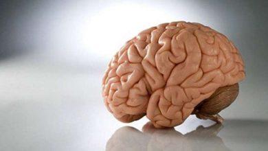 Photo of Вчені стверджують, що мозок людей зменшується