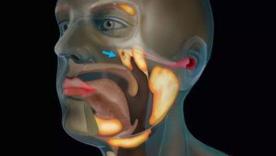 Photo of Нідерландські вчені знайшли всередині голови людини невідомий орган