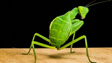 Photo of У Швеції продаватимуть комах у супермаркетах