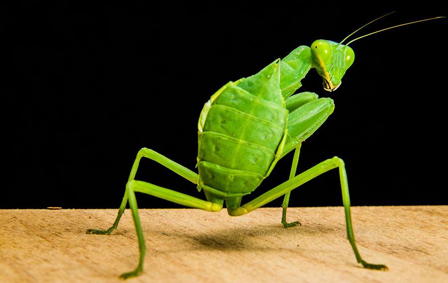 У Швеції продаватимуть комах у супермаркетах