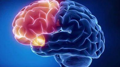 Photo of Білоруські вчені розробили біочіп для вивчення функцій головного мозку
