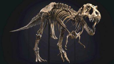 Photo of У США на аукціоні Christie's продали скелет тиранозавра за рекордну ціну (ФОТО)