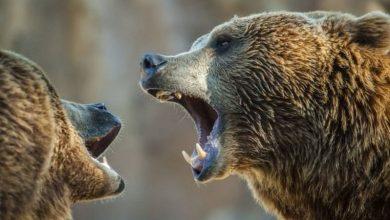 Photo of У Китаї ведмеді загризли працівника зоопарку на очах цілого автобуса з туристами