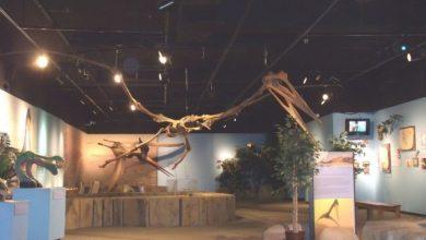 Photo of Вчені виявили в США сліди птерозаврів віком 145 млн років