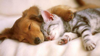 Photo of Вчені з'ясували, що тварини бачать сни