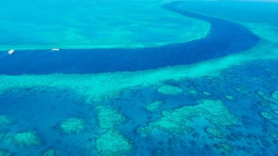 """Photo of На великому бар'єрному рифі біля Австралії виявили підводний """"хмарочос"""""""
