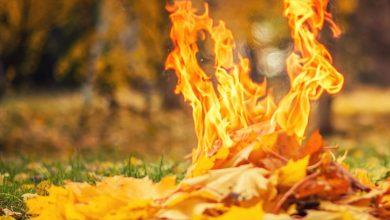 Photo of Чому спалювати листя небезпечно для здоров'я та як його позбутися екологічно