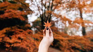 Photo of Як підвищити імунітет восени: корисні поради