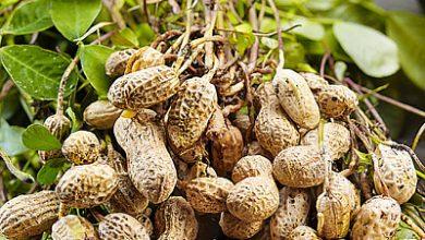 Photo of Як схуднути за допомогою арахісу: поради дієтолога