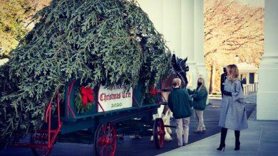 Photo of В Білий дім доставили різдвяну ялинку (ФОТО)