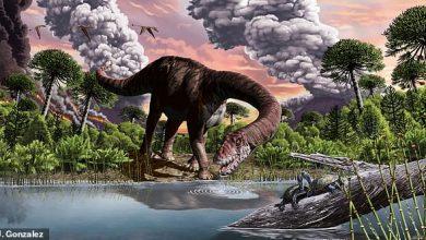 Photo of Знайдено останки динозавра, який жив 179 млн років тому