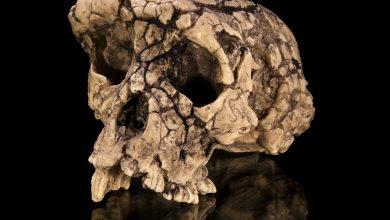Photo of Дослідники ідентифікували людиноподібну істоту, яка жила 7 млн років тому