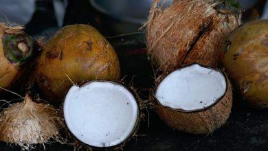 Photo of Студентам одного з університетів на Балі дозволили платити за навчання кокосами