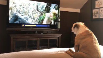 Photo of Експерти розповіли, що коти і собаки бачать у телевізорі