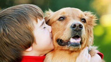 Photo of За допомогою ДНК-аналізу вчені довели, що собаки — не лише найкращі друзі людини, а й найдавніші