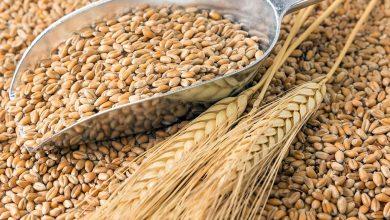 Photo of Єгипет зацікавлений у збільшенні обсягів імпорту українського зерна