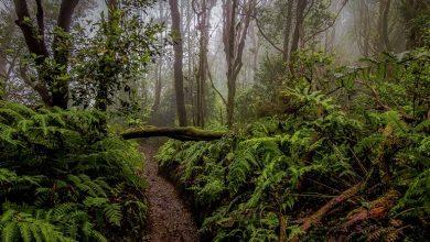 Photo of Кліматологи повідомили, за якої температури різко скорочується життя дерев