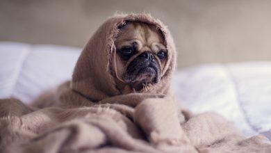 Photo of Як побороти втому: корисні звички та рекомендації від блогерів